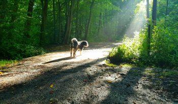 Hund im Sonnenschein: Rudi